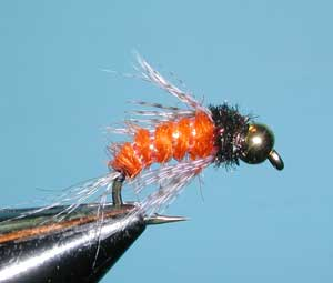 Bird of Prey - Oct. Caddis