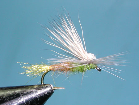 Olive Brown E/C Caddis