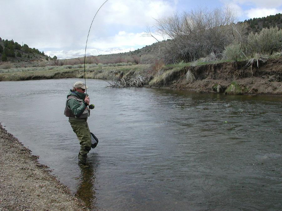 East walker river eastern sierras for Walker river fishing