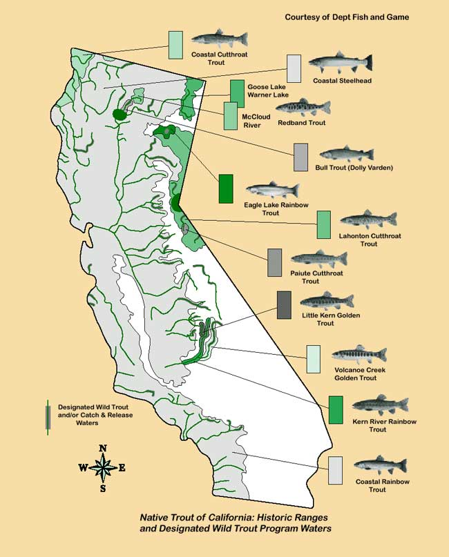 Fish distributions of california trout for Trout fishing southern california