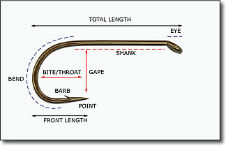 hook anatomy