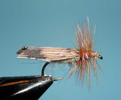 Kings River Caddis