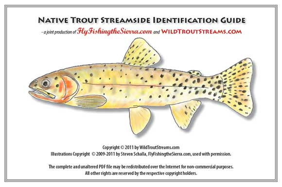 Native Trout Guide