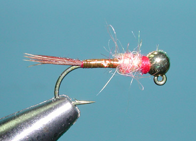 Rainbow Warrior Brown