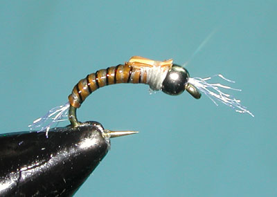 Ginger/Gray Spanflex Emerger