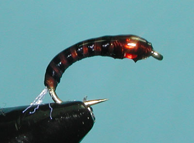Brown/Black Spanflex Pupa
