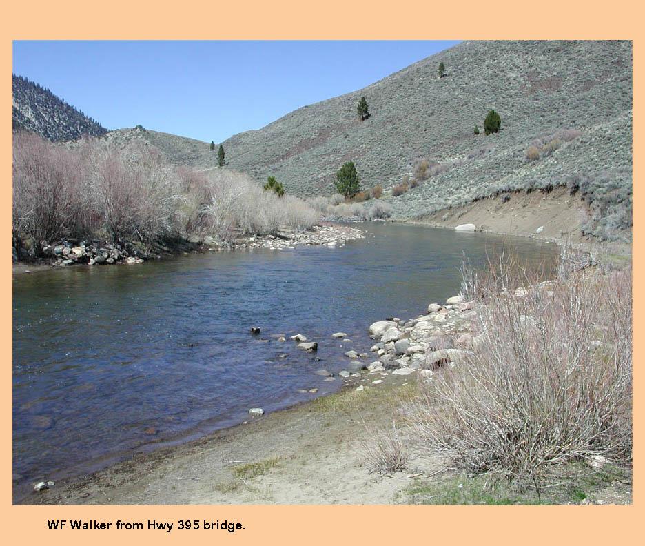 West walker river pickel meadows eastern sierras for Walker river fishing