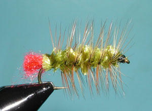 Olive/Brown Woolly Worm